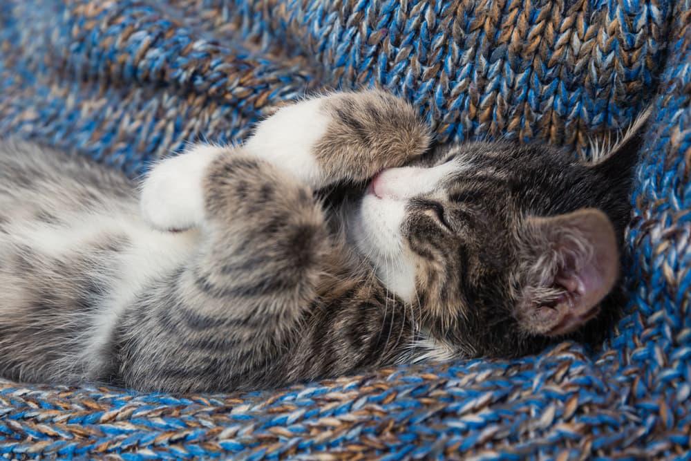 Cat snuggled in a blanket