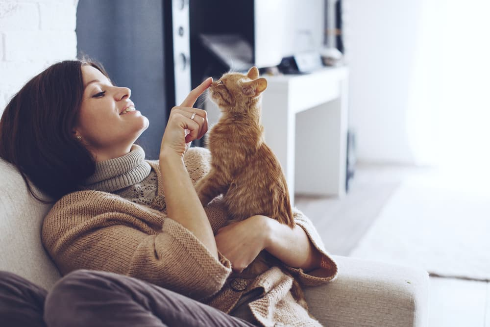 Cat and owner on couch