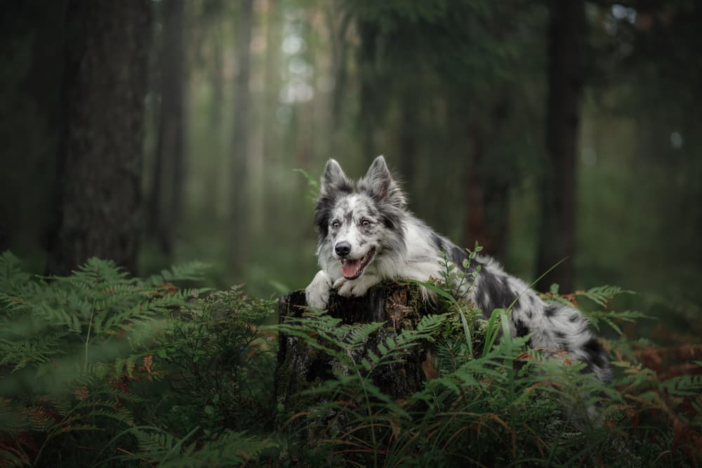 Dog sitting on a tree stump in the forest