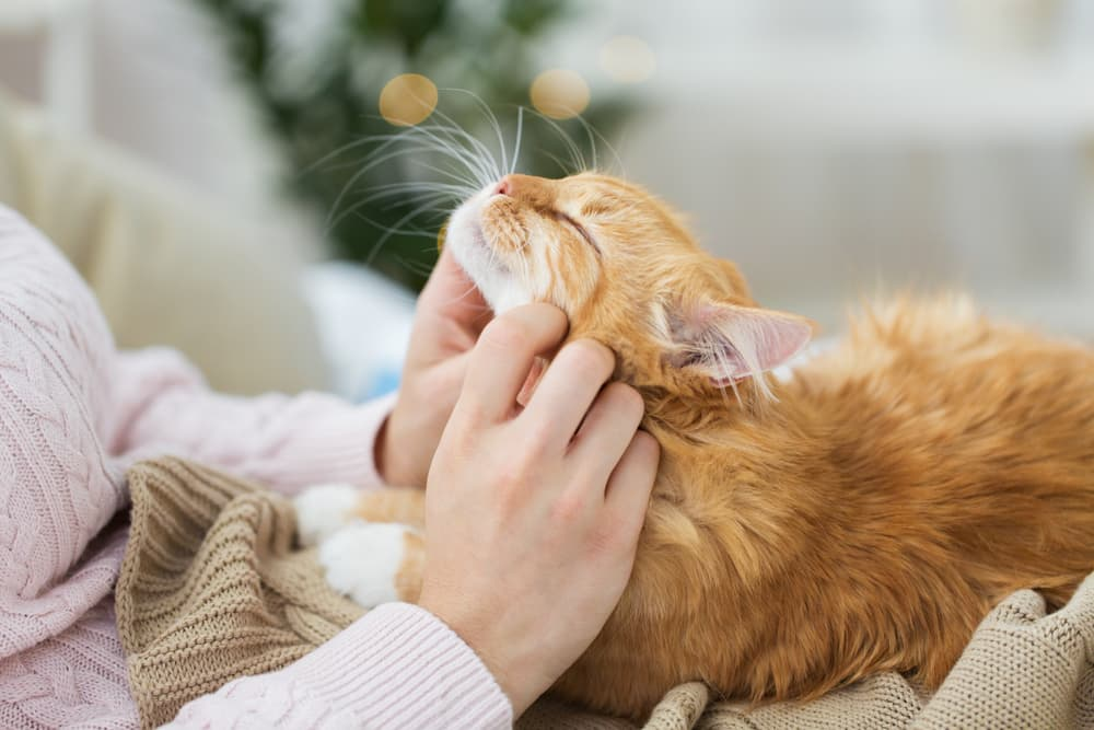 Happy cat and owner cozy together on bed