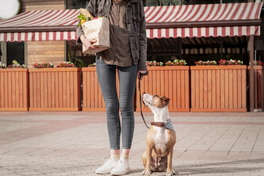 Woman with bag full of vegetables from store with dog