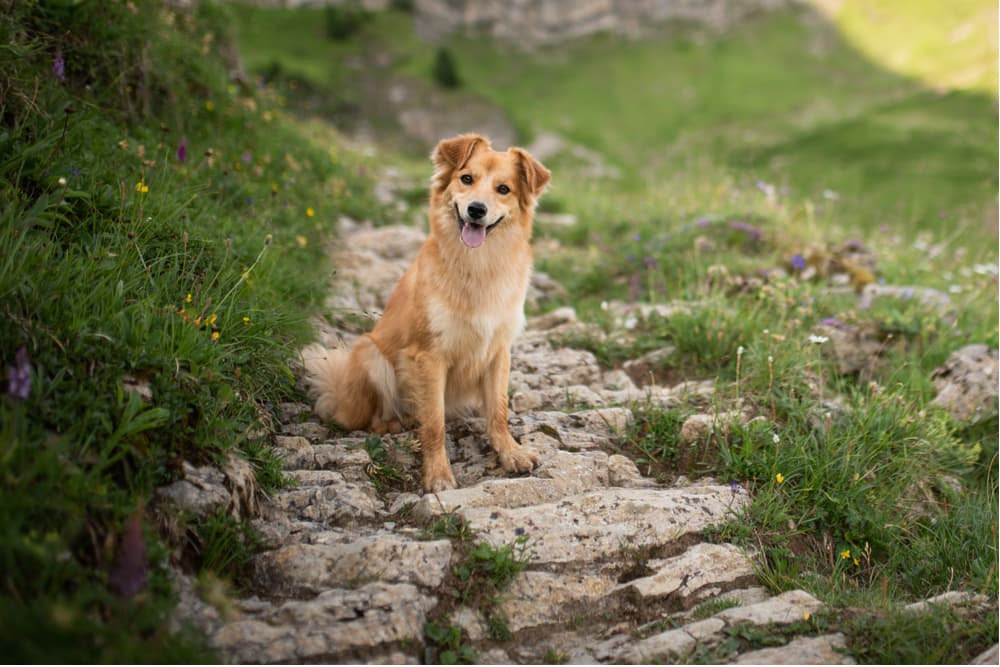 Dog on a hike near long grass