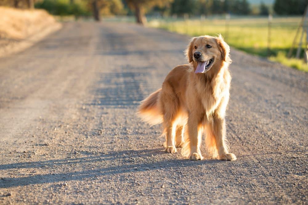 Dog on a farm