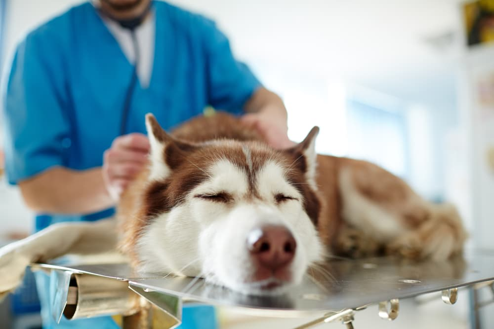 Dog at the vet hospital