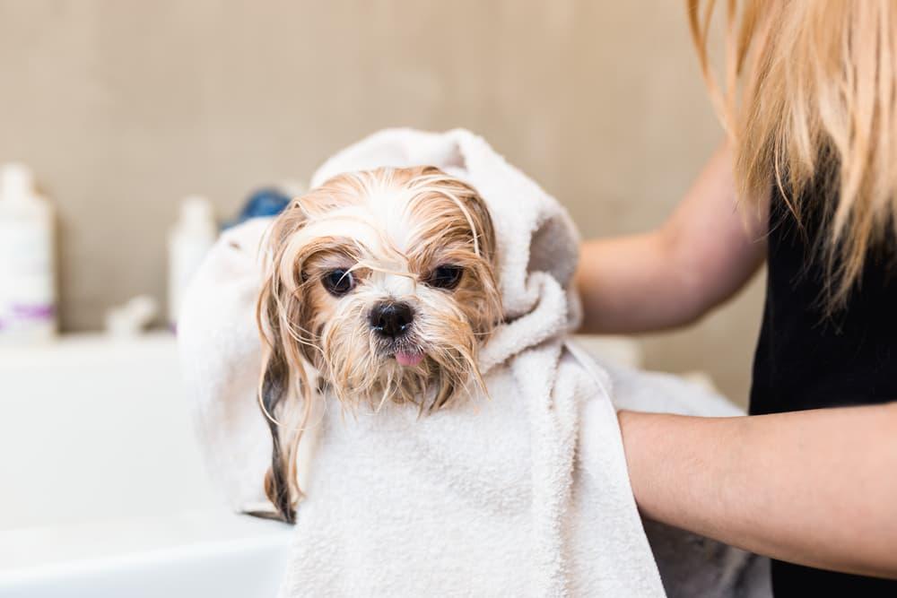 dog gets a bath