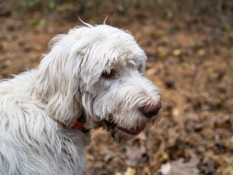 dog with matted fur