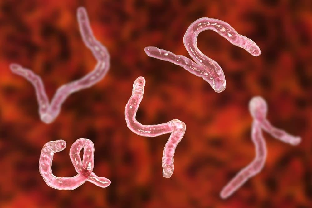 3D illustration of hookworms