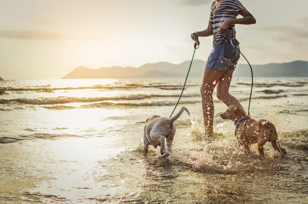 dogs on leash splash in water