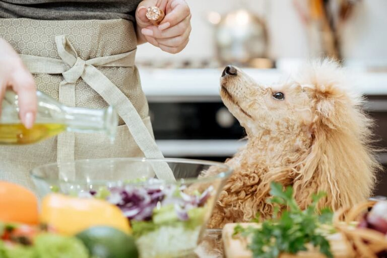 Dog looking up at owner while they are pouring olive oil