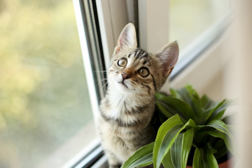 Cat up high on a window sill next to a plant