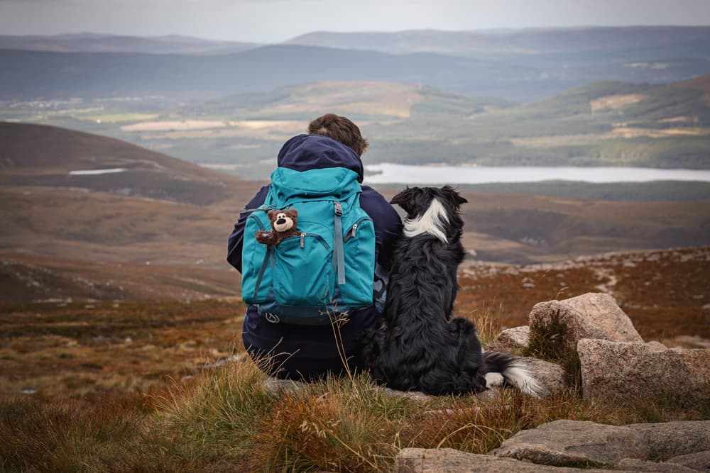 Border Collie and person hiking