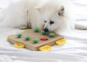 dog using food puzzle