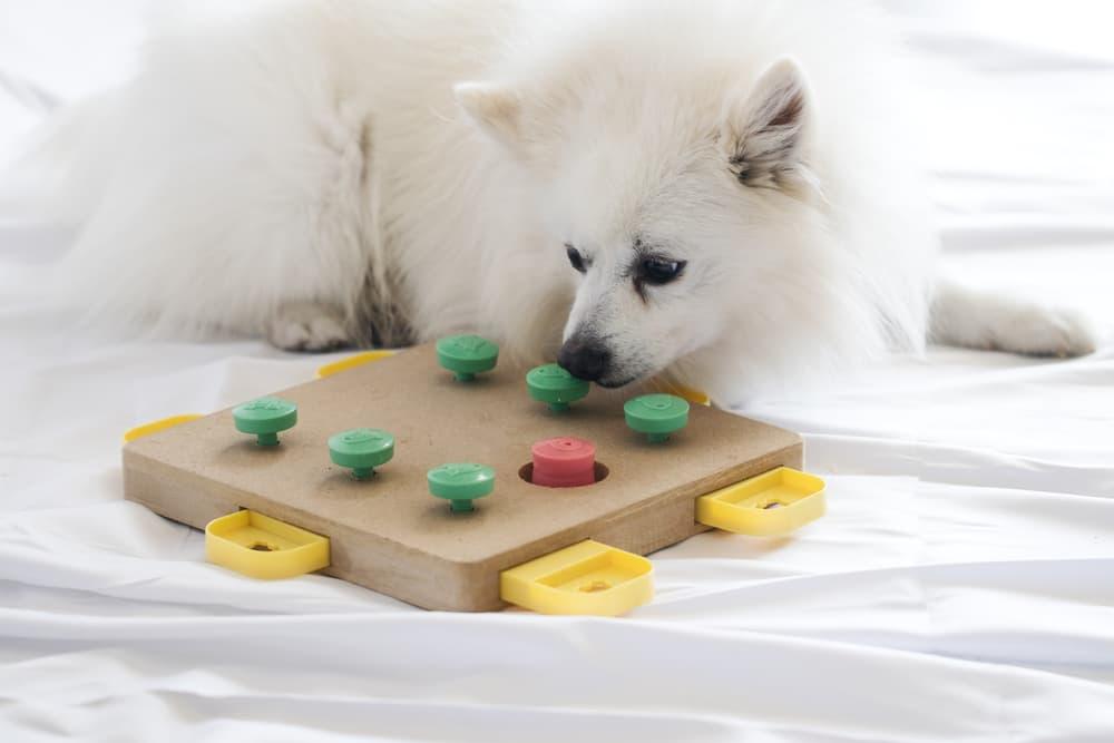dog using food puzzle
