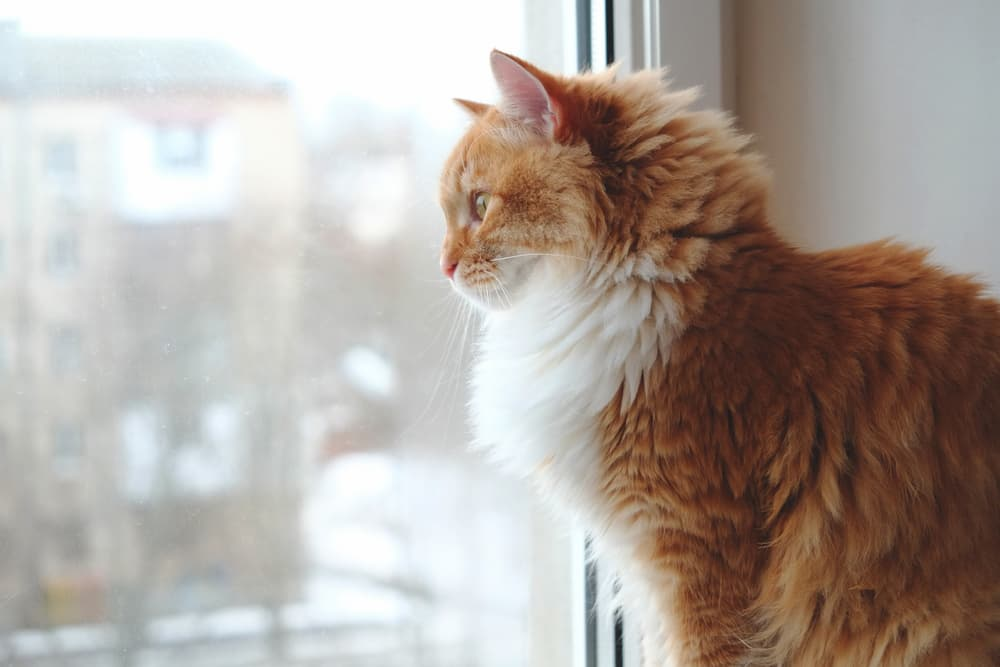 10 Things to Avoid Doing When Leaving Your Cat Alone