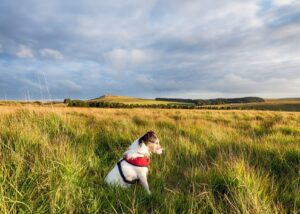 Happy dog wearing harness in a beautiful landscape