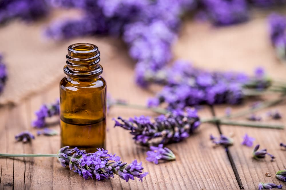 Lavender oil and dried lavender on a wooden table