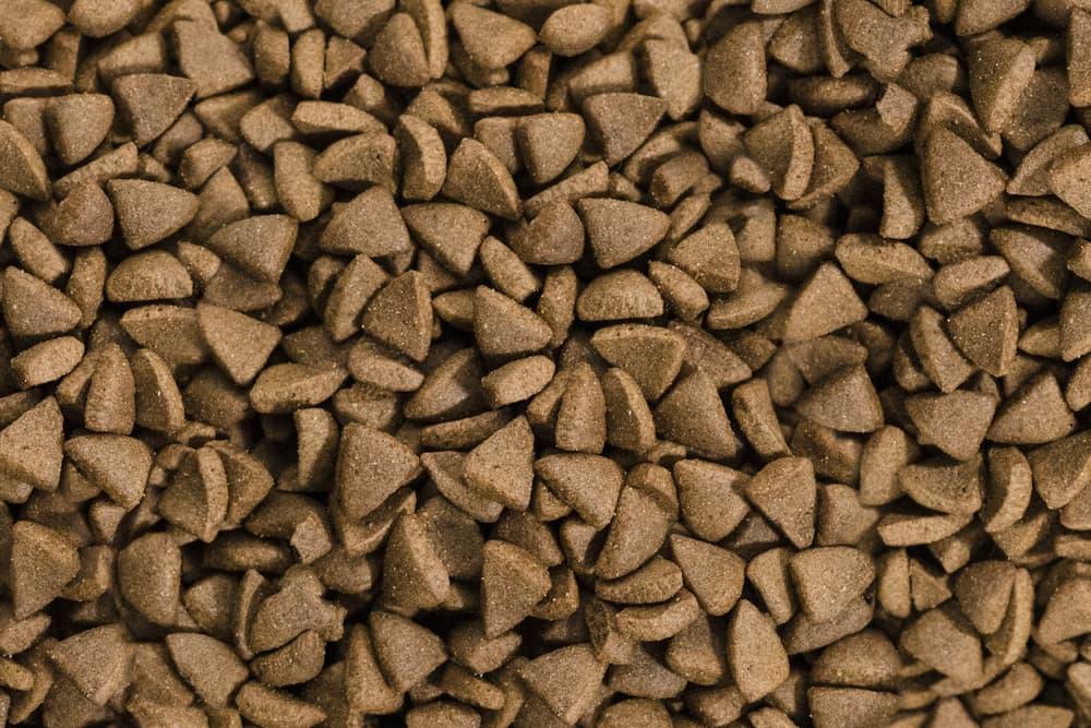 Dried dog food close up