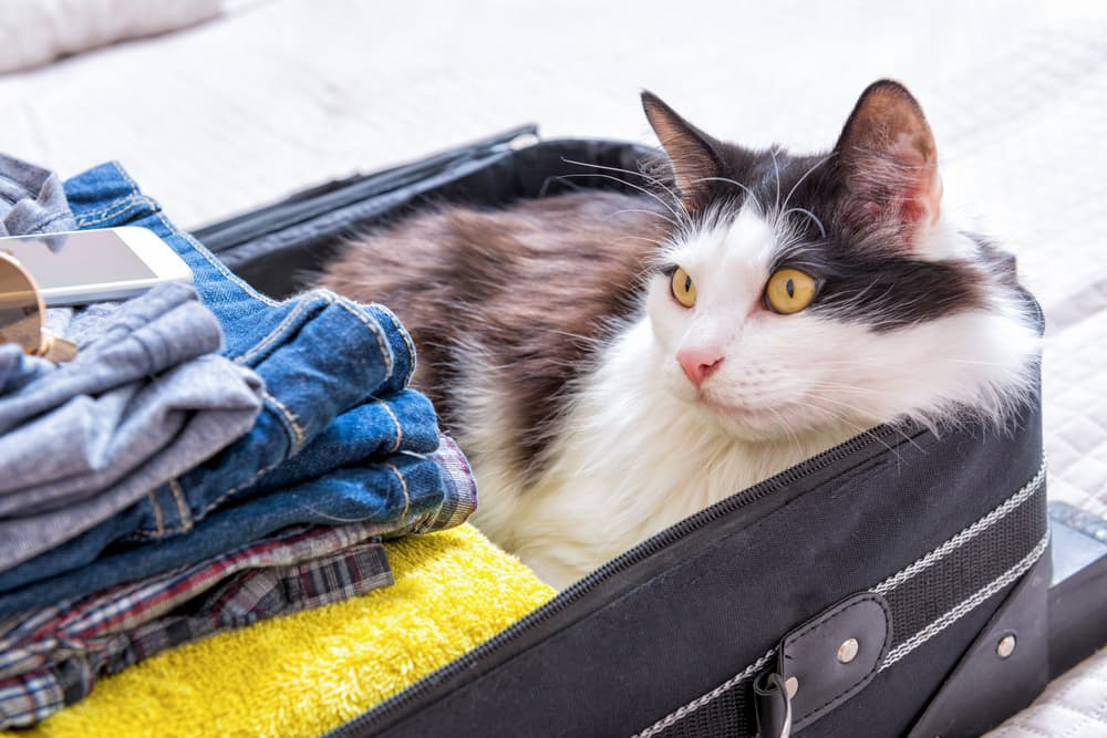 Cat hiding in a suitcase looking scared