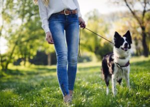 woman walking Border Collie