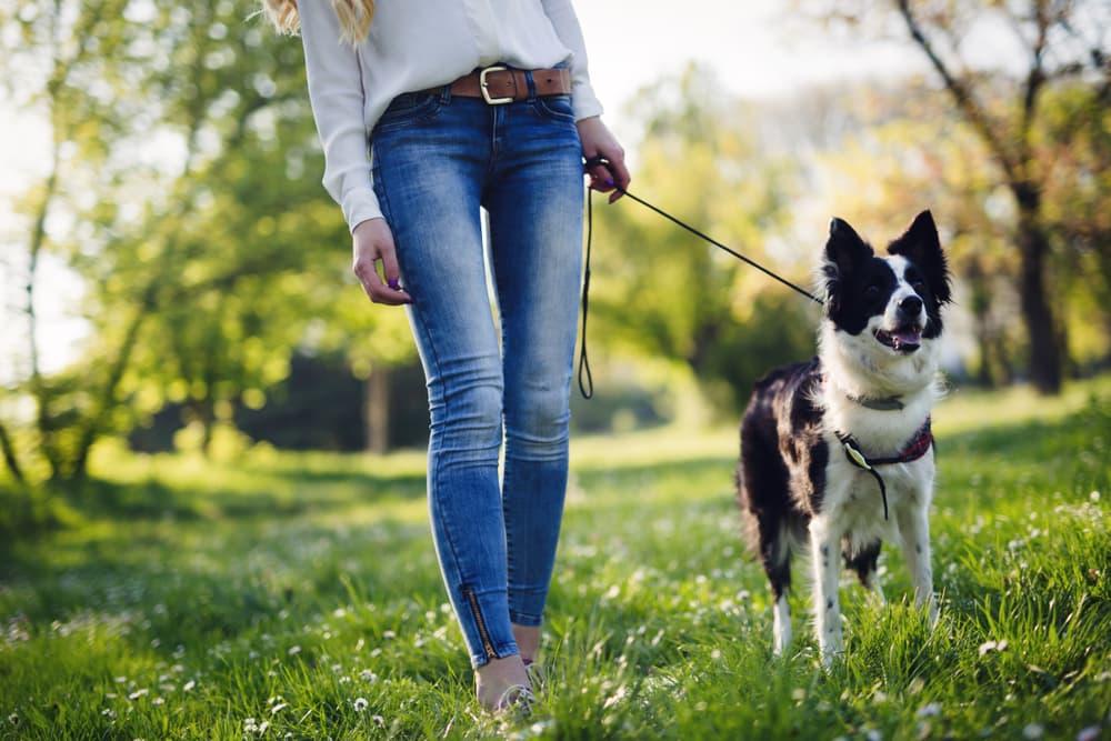 woman walking Border Collie