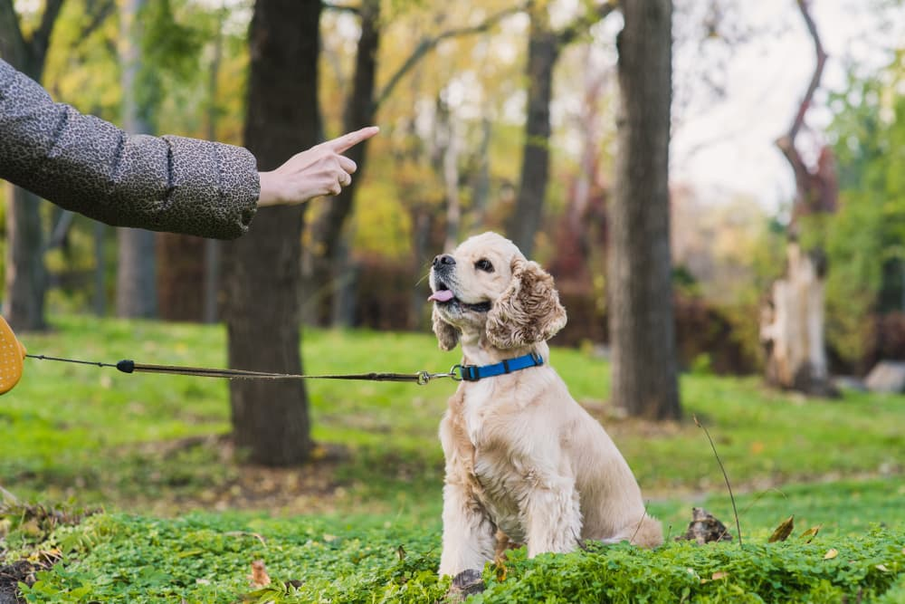 Woman training dog in park
