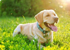 dog lies in grass