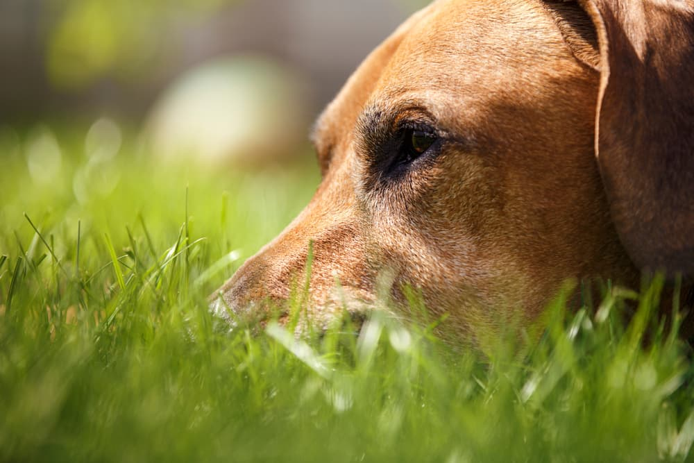 6 Dangers of Skipping Heartworm Prevention for Dogs
