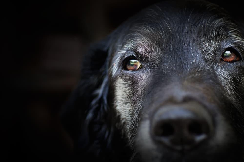 Dog looking up close up to camera