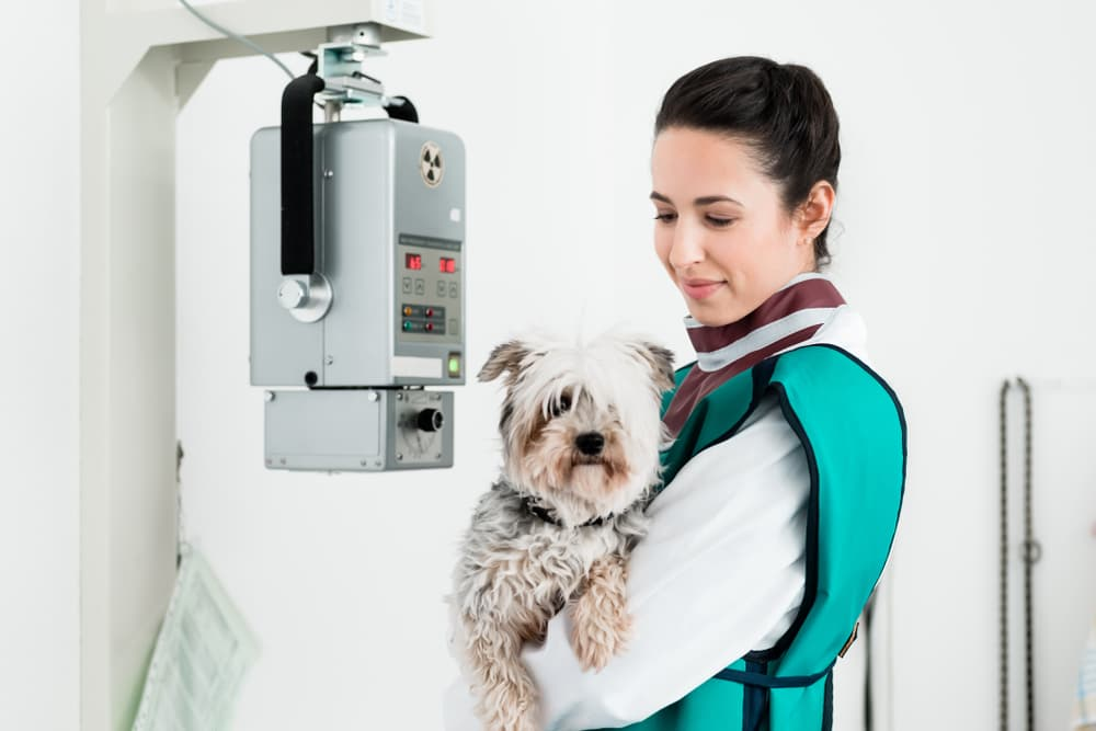 veterinarian prepping for dog x-ray