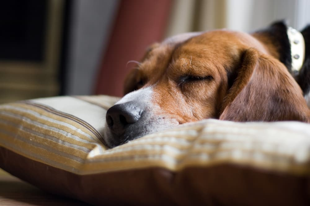 Dog laying down sleeping