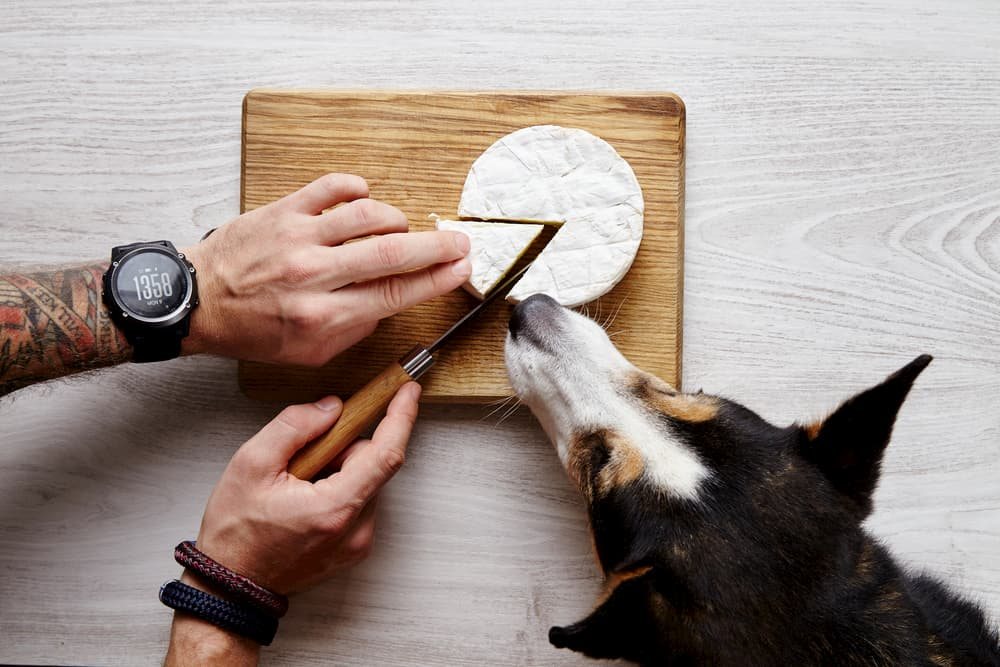 Person cutting a wedge of brie with dog close by sniffing