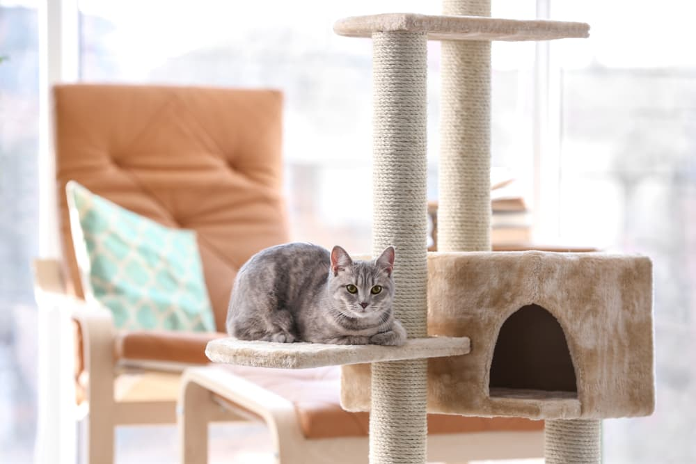cat lounging on a cat tree