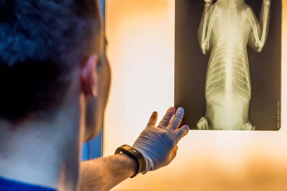 veterinarian looking at dog x-ray