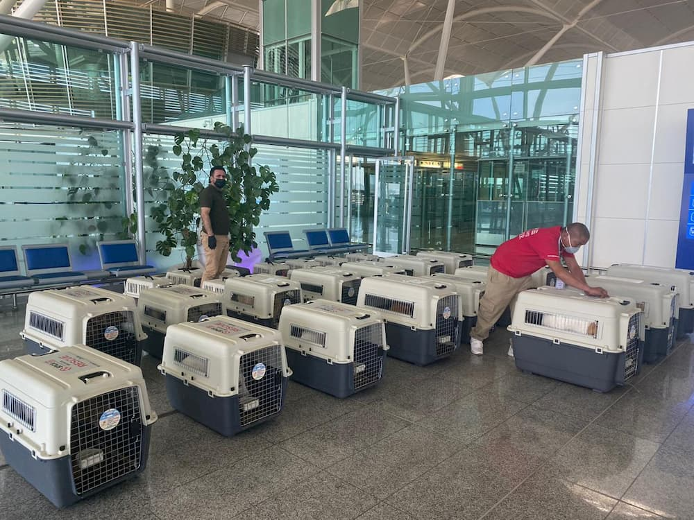 Crates of rescue animals lined up at airport