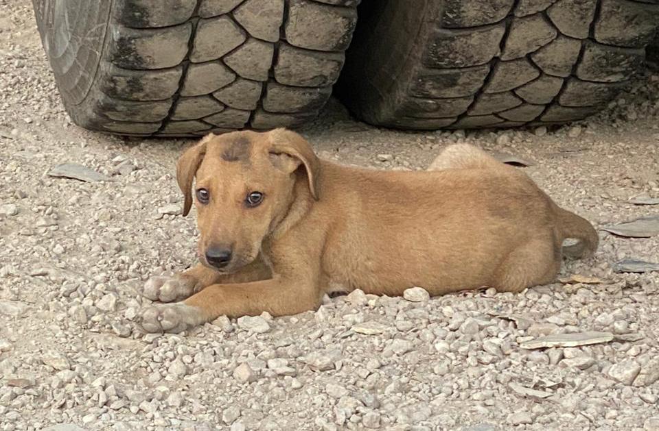 Stray puppy in Beirut