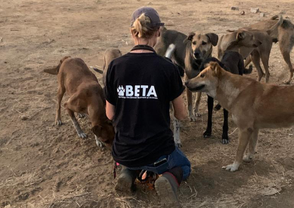 Rescue worker feeding stray dogs in Beirut