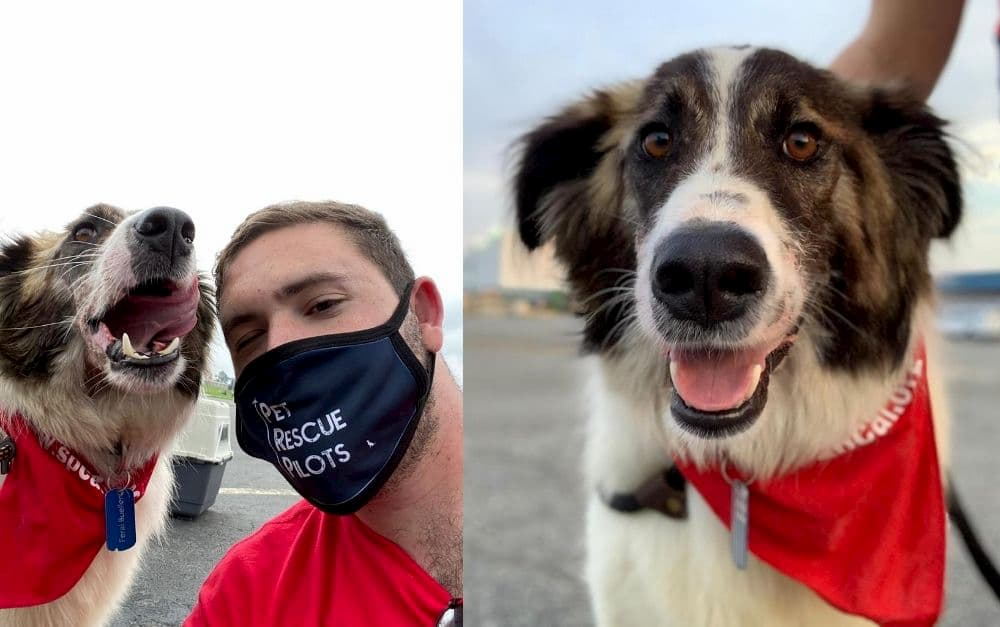 Pilot volunteers to rescue pets from Iraq