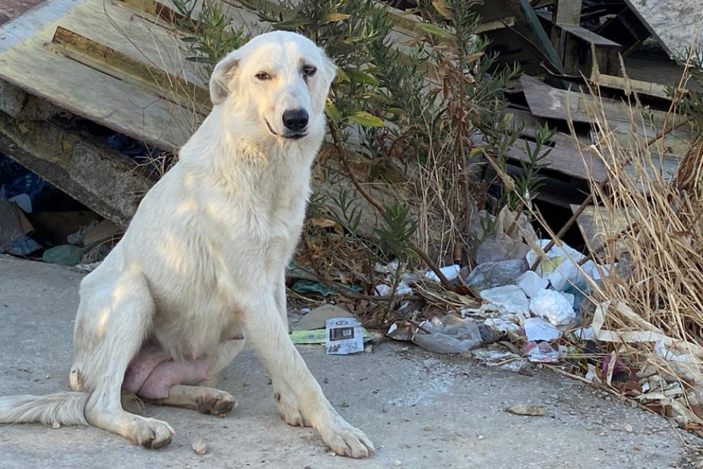 Beirut Rescue Helps Animals Impacted By Devastating Explosions