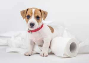 puppy with toilet paper