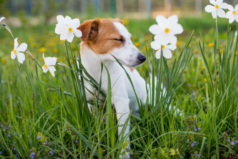 Dog standing in field with flowers