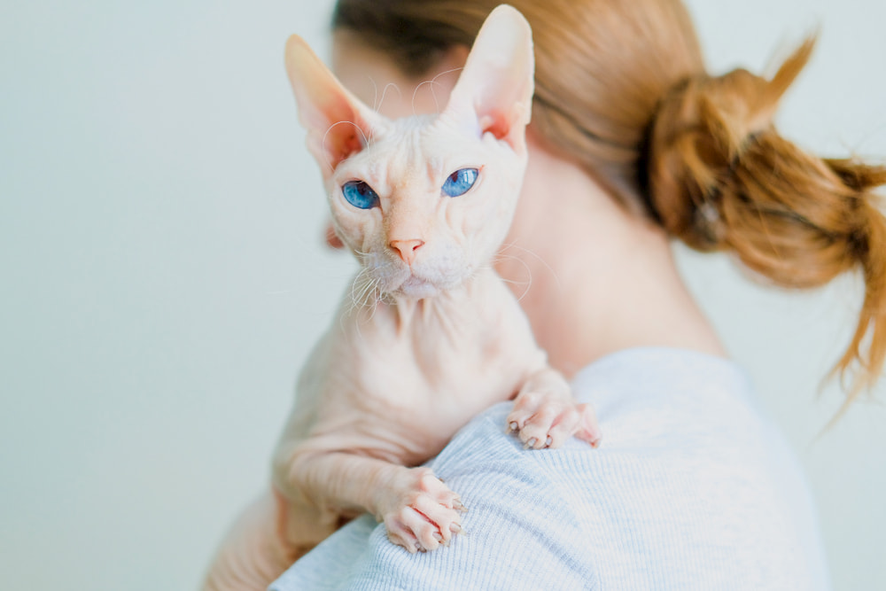 Hairless Cat Adoption: Important Tips For Bringing Home a Baldy