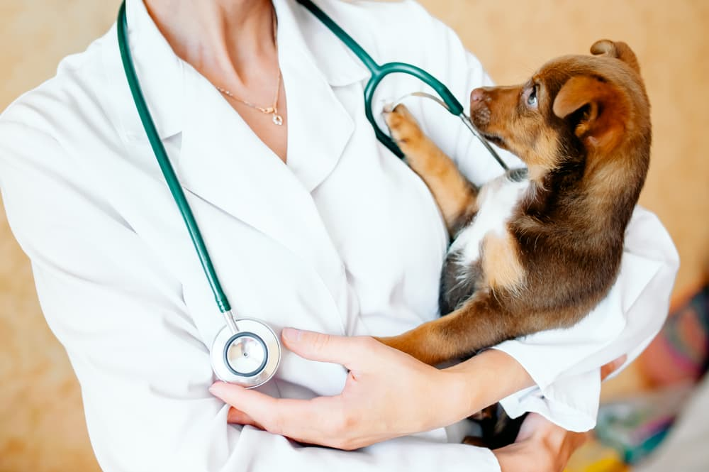 Veterinarian holding puppy