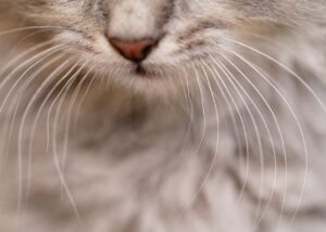 Closeup of cat whiskers