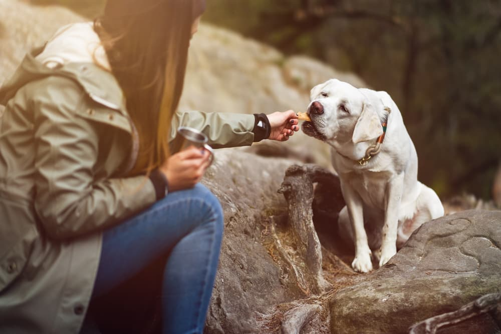 Dog being fed a treat on a hike