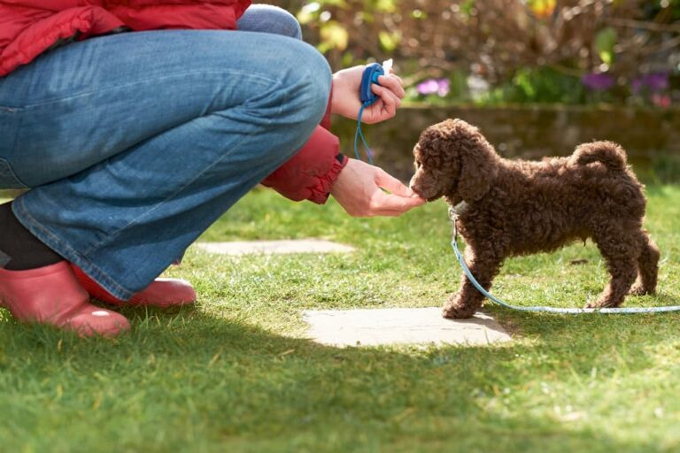 clicker training for puppy