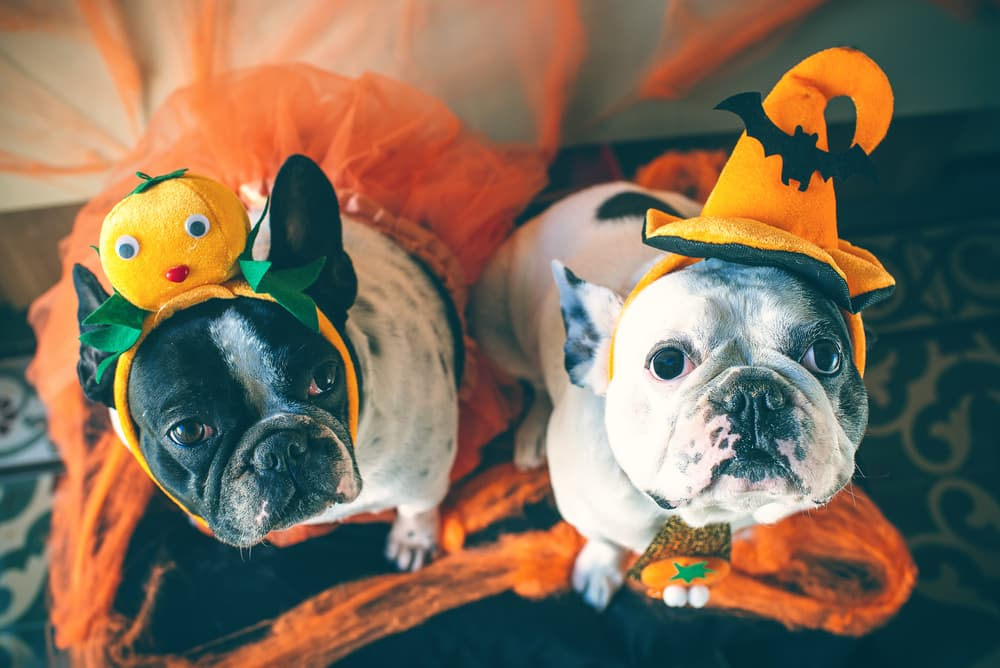 9 Scary and Surprising Halloween Dangers for Pets