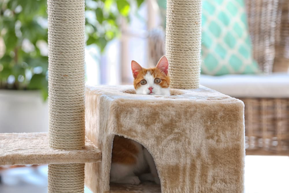 Best Cat Trees for Climbing Felines