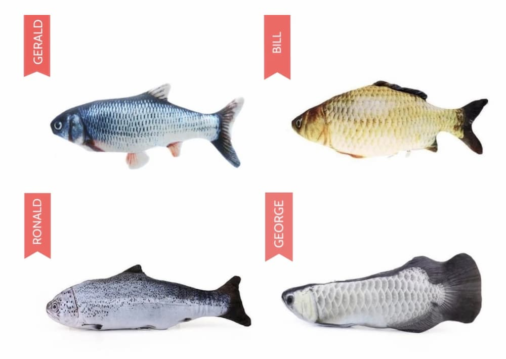 Kittenfy fish toys