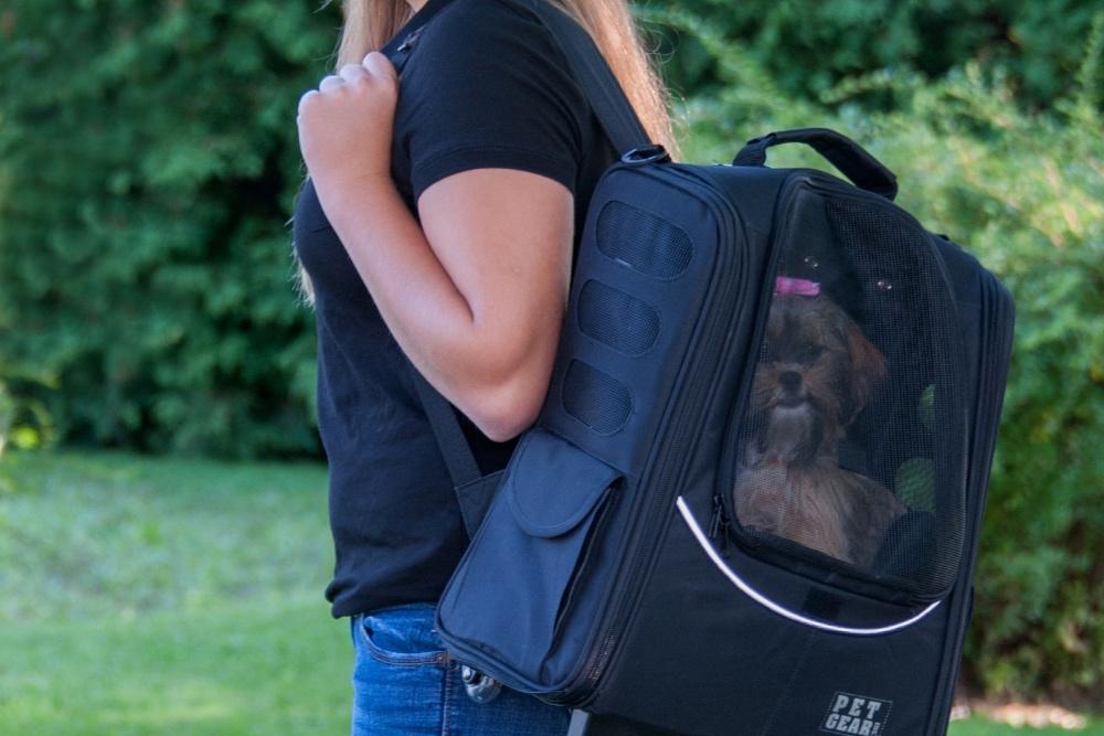 Terrier in backpack carrier