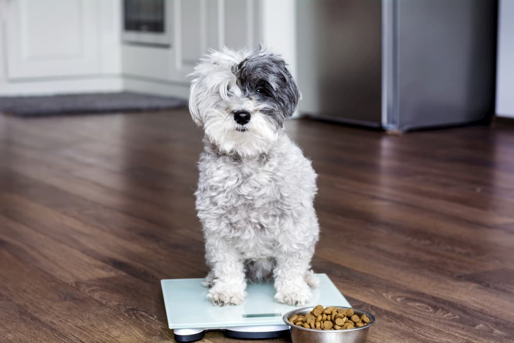 How to Tell a Client That Their Pet Is Overweight